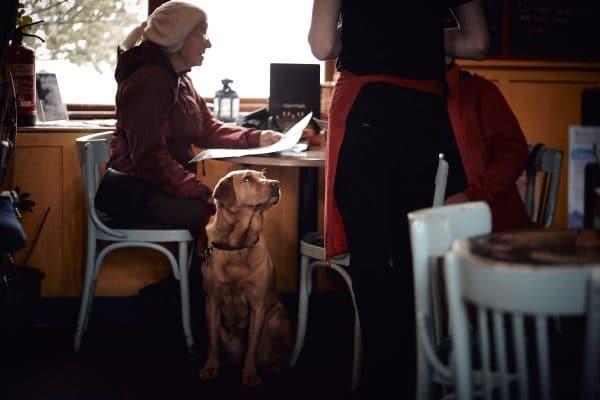 The Most Dog-friendly Restaurants in America