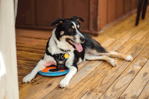 Guide dogs of America | America Guide